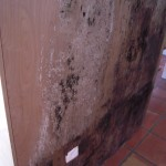 Mold growth located on kitchen cabinets.