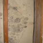 Closeup of a common wall in the building showing mold growth.
