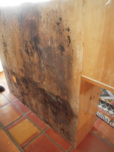 Black Mold In Kitchen Cabinets Image And Shower Mandra